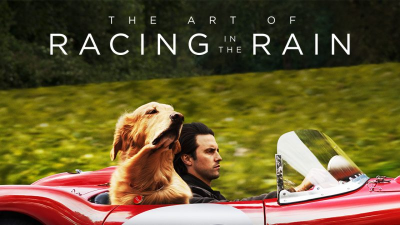 Image result for racing in the rain